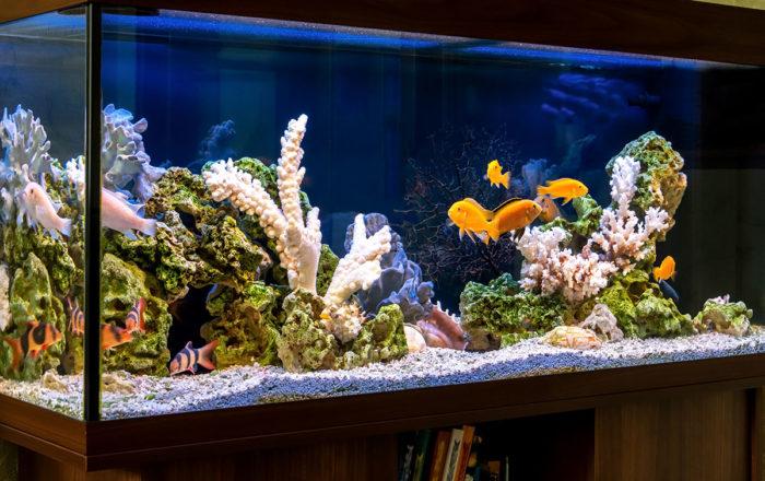 aquarium_03