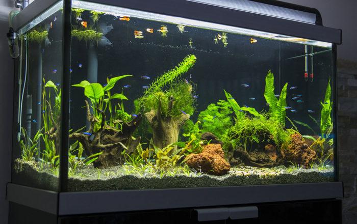 aquarium_04