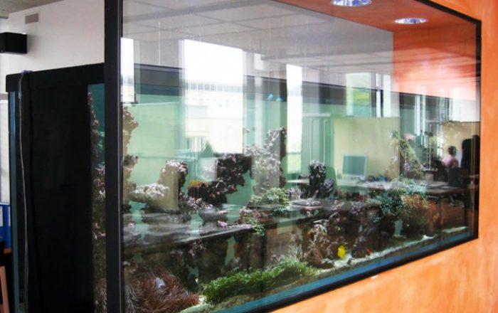 aquarium-418b8fd55c